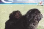 07-I nostri CANI settembre 2012 pagina1