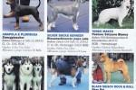 10-I nostri CANI gennaio 2013 pagina2