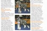02-CANI pagina2
