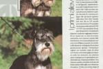 04-WORKDOGS pagina2