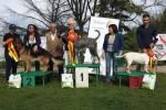 21-Espo Gruppo Cinofilo Capitolino 6.4.2014-BOB