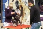 01-Albarossi'k DREAM Catcher 1^ cuccioli - molto promettente espo int. SEMPETER