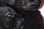 03-Cuccioli ad una settimana