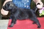 05-Cuccioli a quattro settimane