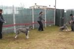06-Xelene in addestramento marzo 2012