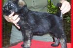 18-Cuccioli a cinque settimane FEMMINE