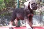 23-Cuccioli a otto settimane MASCHI