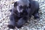 05-Cucciolo