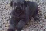 06-Cucciolo