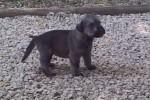 07-Cucciolo