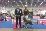 Euro Dog Show - Ginevra 31 agosto 2013 - Xelene z grodu Xsiazat Pomorskich   Campionessa Europea  - Eurowinner 2013