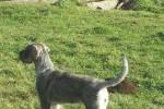 06-Greta 5 mesi
