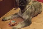 11-Greta 8 mesi