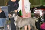 34-GRETA-PSK-World-Dog-Show-in-Leipzig