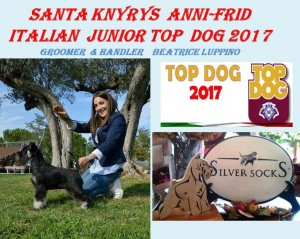 Santa Knyrys Anni-Frid Italian Jr Top Dog  2017